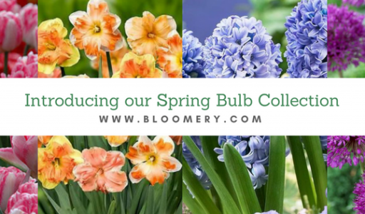 Introducing our Spring Bulb Collection